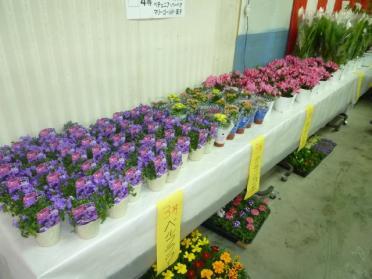 20110411_hana_fair_004.jpg