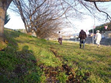 20110420_sakura_002.jpg