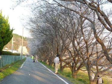 20110420_sakura_005.jpg