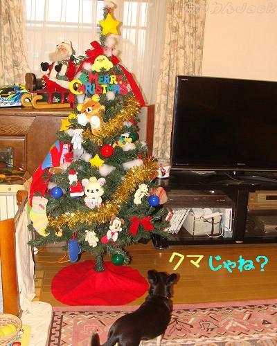 2010-12-14.jpg