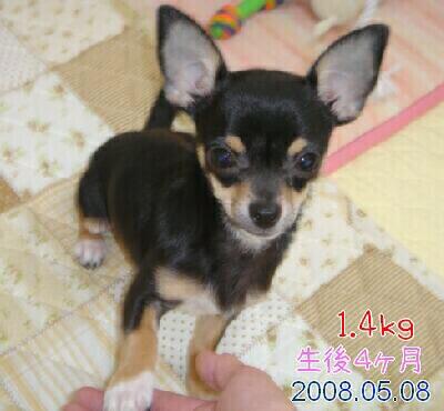 2008.05.08(生後4ヶ月)