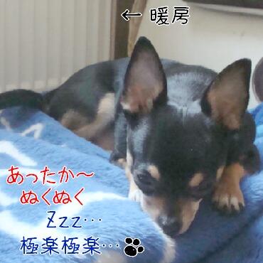 DSC01160-2.jpg