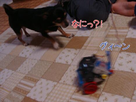 DSC01517-2.jpg