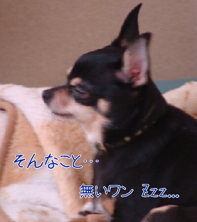 DSC01826-2.jpg