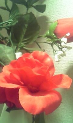 Image250_20120222093647.jpg