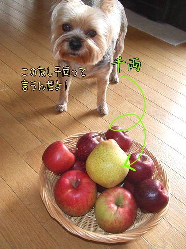 091105-apple1.jpg