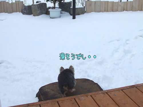 091223-yuki1.jpg