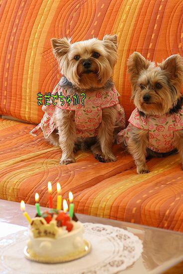 100115-birthday3.jpg