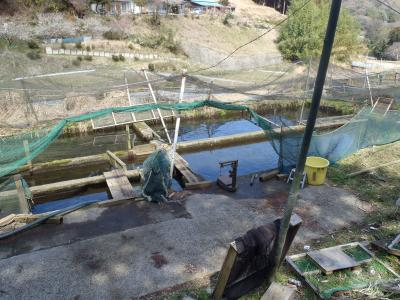 小さな養魚場