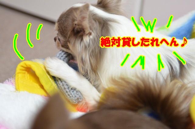 DSC_4060_20120210214359.jpg
