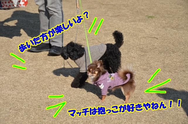 DSC_5016_20120317221355.jpg