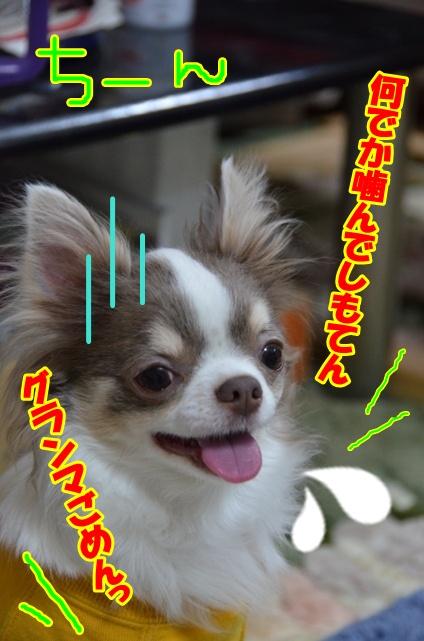DSC_5181_20120322213025.jpg