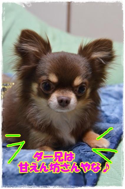 DSC_5296_20120323213837.jpg