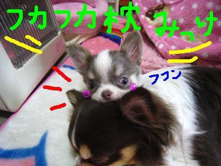 IMG_4012.jpg
