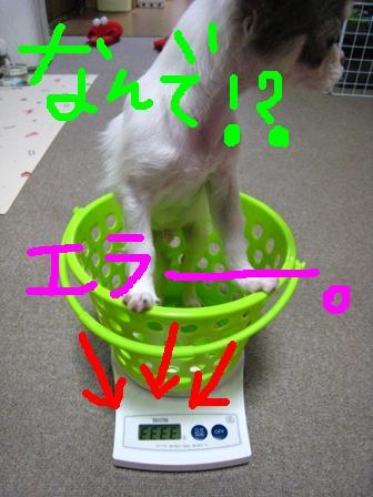 IMG_4486.jpg