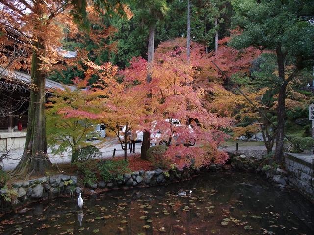円山公園の紅葉1