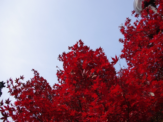 知念院の紅葉2