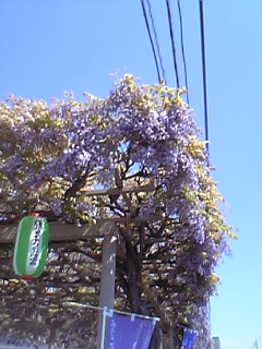 07-04-29_10-08.jpg