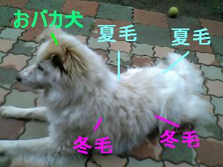 sarako_2.jpg