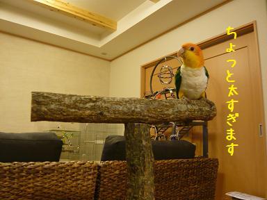 2_20100130214348.jpg