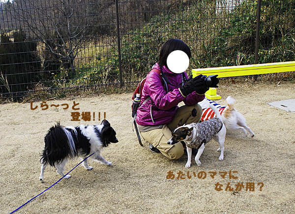 DSC_9628.jpg
