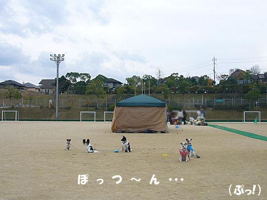 P1130310.jpg