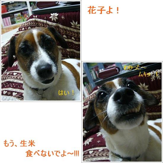 cats_20120202121821.jpg