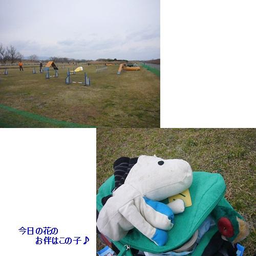 cats_20120307180759.jpg