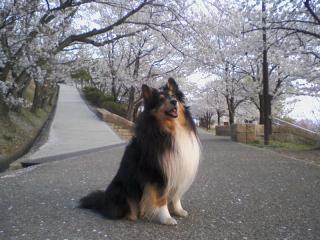 2011-04-12_0001.jpg