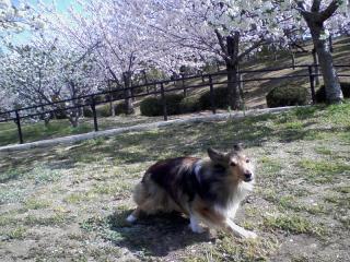 2011-04-13_0000.jpg