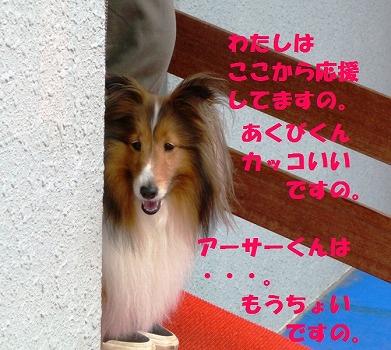 P1050677-t.jpg