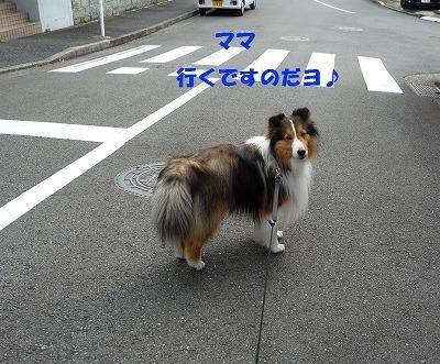P1050838-t.jpg