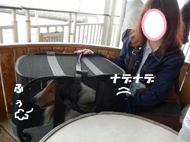 P1070102-t.jpg