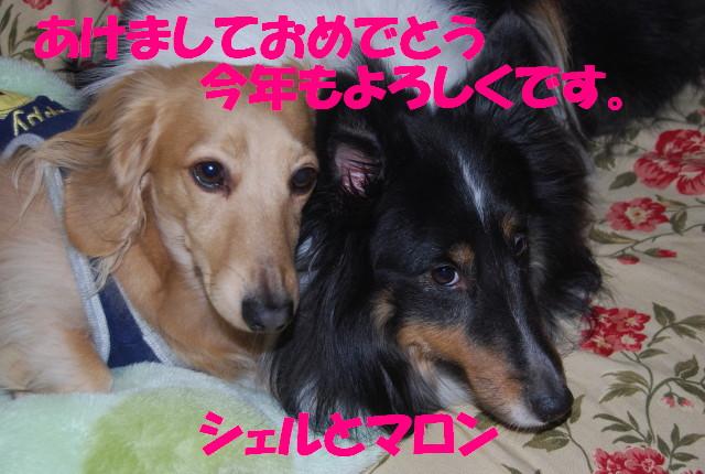 DSC_0004jsjs.jpg