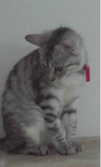 2011-2-13 akari1