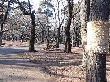 大宮公園1