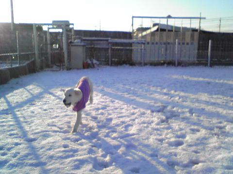 初雪体験1