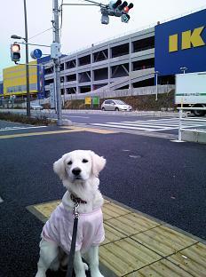 IKEAの前で