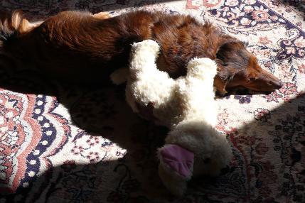 アニーと添い寝のラッキー