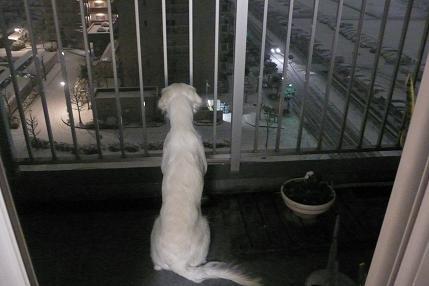雪を見るジュディー