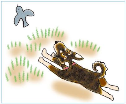 ジロマル-鳥を追う