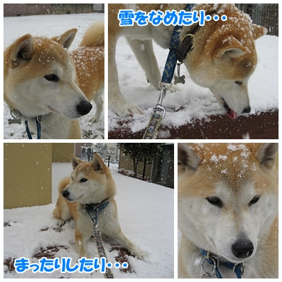 雪とパンチ