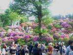 つつじ祭り20110504その1