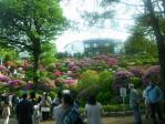 つつじ祭り20110504その2