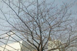 20110331_181305.jpg