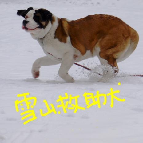バーディ♪雪の大山002