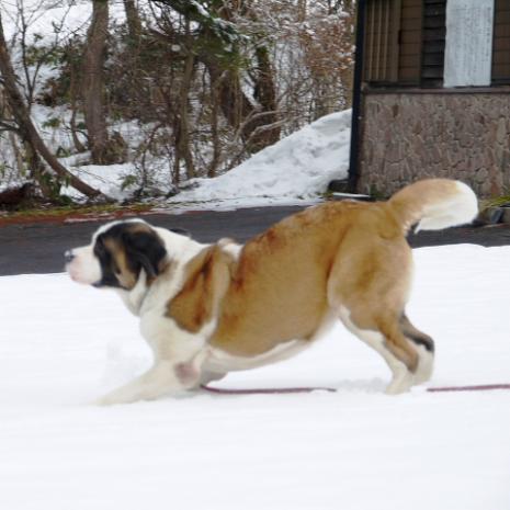 バーディ♪雪の大山003