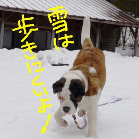 バーディ♪雪の大山01