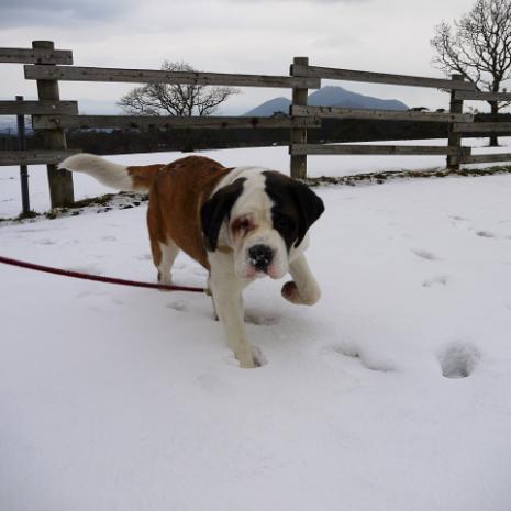 バーディ♪雪の大山10