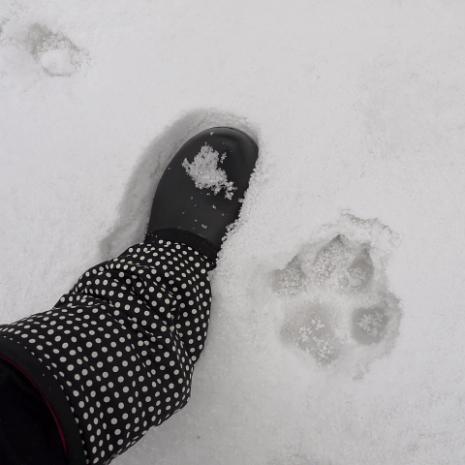 バーディ♪雪の大山13